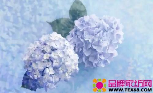 清雅含香绣球花