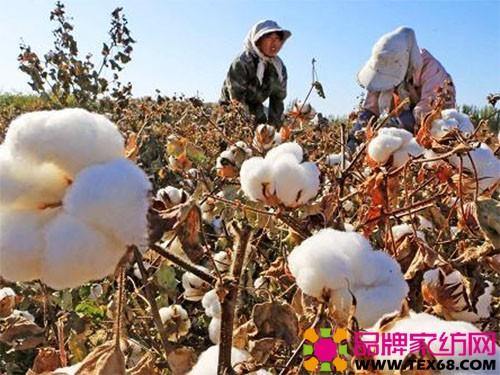 新棉上市或给国内棉花价格带来上涨契机